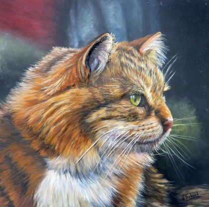 Virginie Trabaud - Chat maine coon