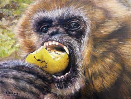 Virginie Trabaud - Gibbon croquant une pomme
