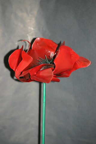 Jean Jean -Charles Stora - Coquelicot